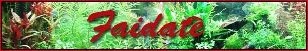 faidat__