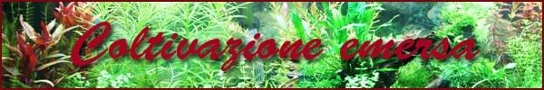 coltivazione emersa