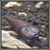 faunus ater devil thorn snail100x100